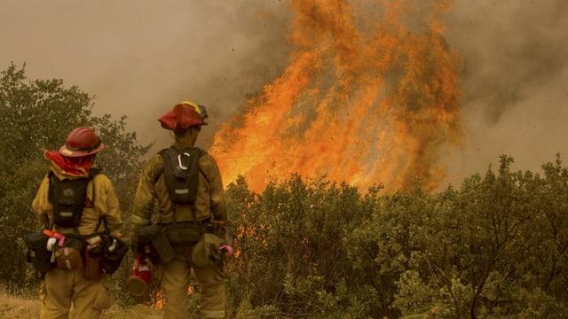 Feuerwehrleute vor brennendem Buschwerk