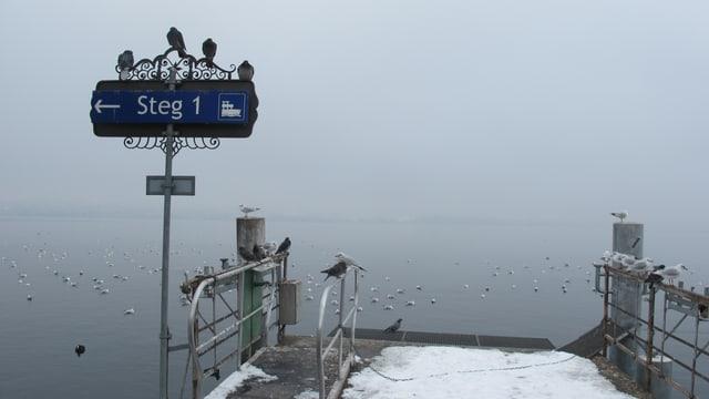"""Tauben sitzen auf einem Schild, darauf steht """"Steg 1"""", Möwen plantschen dahinter im Wasser."""