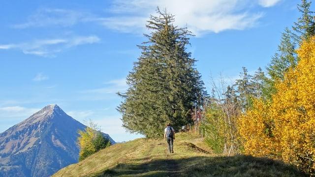 Wanderer unterwegs oberhalb von Spiez.