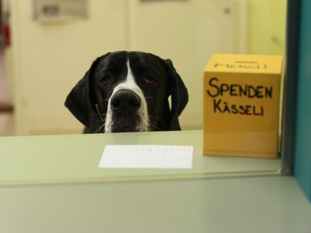 Hund hinter dem Tisch, rechts das Spendenkässli.