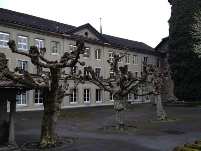 Schulhof mit Bäumen