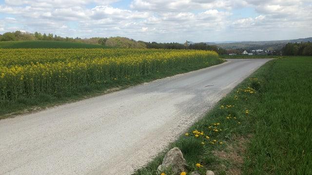 Landstrasse durch Sonnenblumenfelder