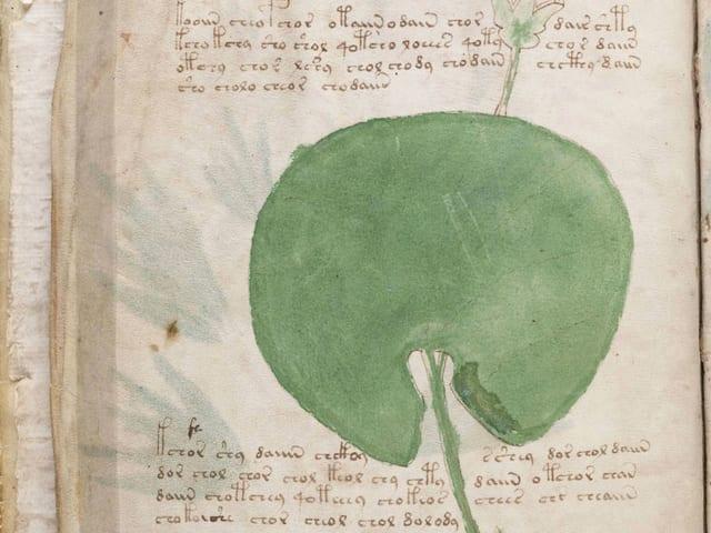 Eine Seite des Voynich-Manuskripts.