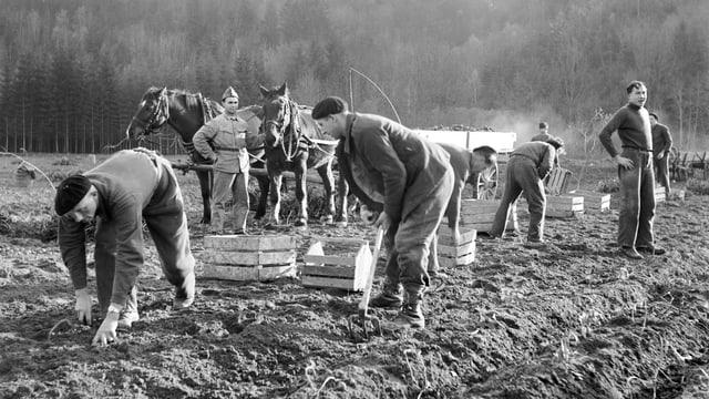 Historisches Foto von Internierten auf einem Acker
