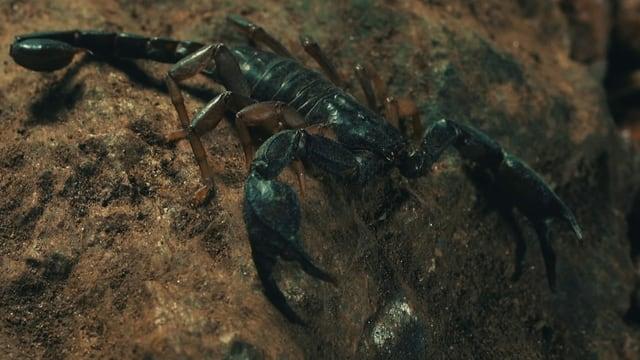 Video «Super Bio Hero: Skorpion (2/12)» abspielen