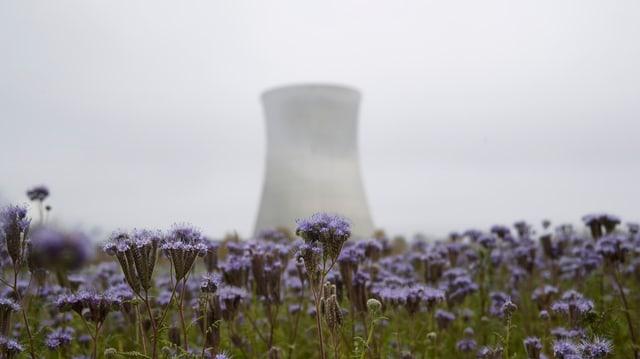 Ins vesa da lunsch l'ovra atomara a Leibstadt en il chantun Argovia - davant ha i in prà cun flurs.