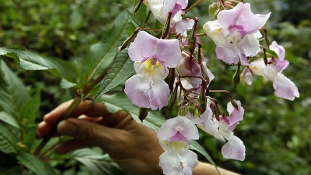 Ein Strauch mit rosa Blüten.