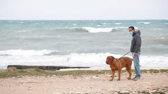 Italinier mit Hund am Strand