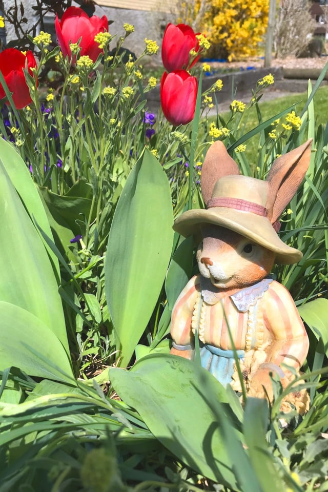 Keramikhase im Gärtner-Outfit inmitten von Tulpen.