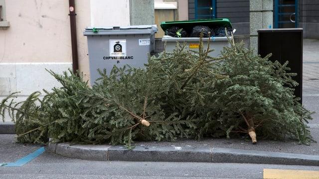 Christbäume werden im Müll entsorgt, liegen vor Mülltonnen.