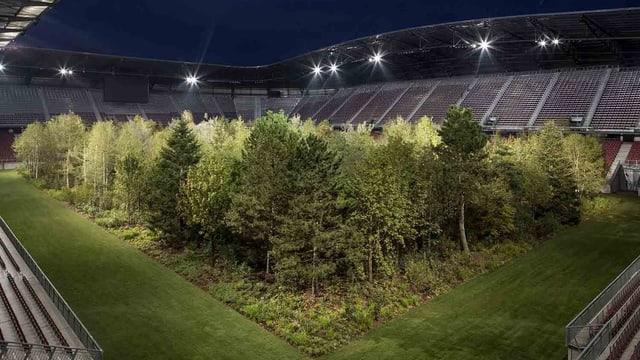 Ein leeres Fussballstadion: auf dem Spielfeld befindet sich ein dichter Mischwald.