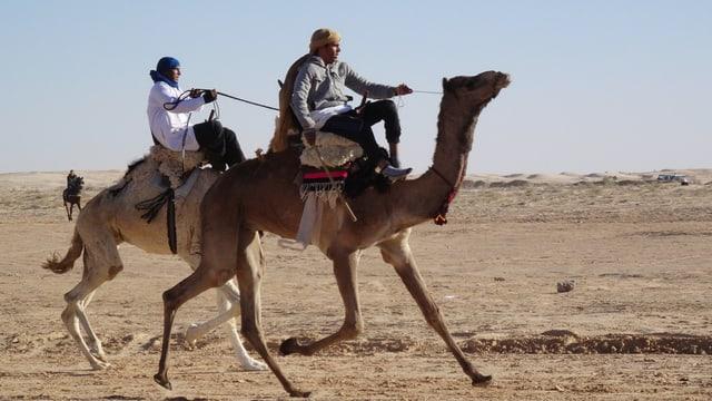 Video «Das Comeback der Kamele - Die Götter der Anden» abspielen