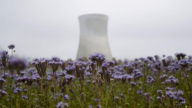 Purtret d'ina ovra atomara e davantvart in prau cun flurs.