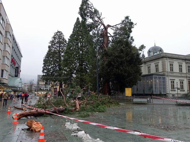 Abgebrochener Baum