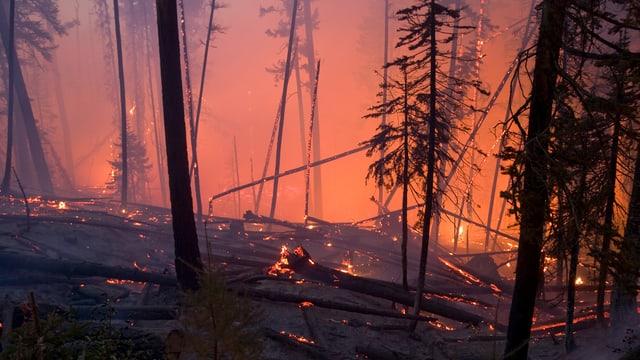 Ausschnitt aus einem Waldbrand