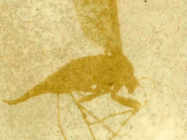 Die Silhouette eines Käfers auf gelbem Grund.