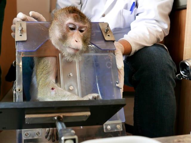 Ein Affe in einer Art Kiste. Er ist am Kopf und am Arm verletzt.