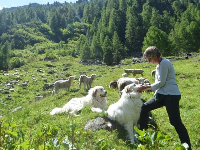 Die Hirtin streichelt einen Herdenschtuzhund, im Hintergrund weiden Schafe.