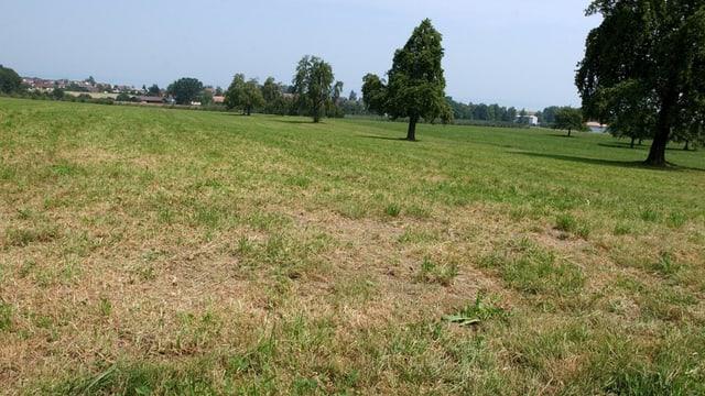 Blich auf ein Feld mit verdörrtem Gras.