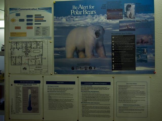 Ein Schuld warnt vor Eisbären und erklärt, wie man sich verhalten soll.