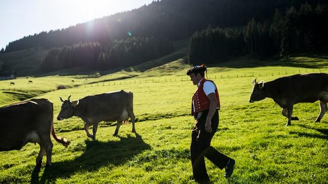 Ein Senn läuft mit drei Kühen über eine Alp nähe Urnäsch.