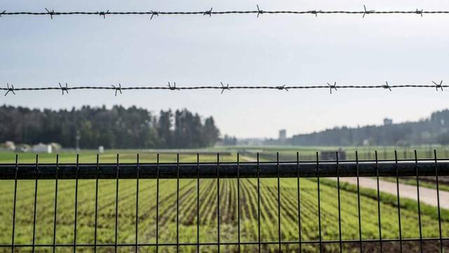 In der Schweiz finden Freilandversuche mit Gentech-Pflanzen statt – am Agroscope in Reckenholz-Tänikon (ZH),