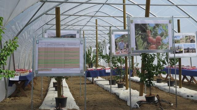 Informationstafeln bei Pflanzen.