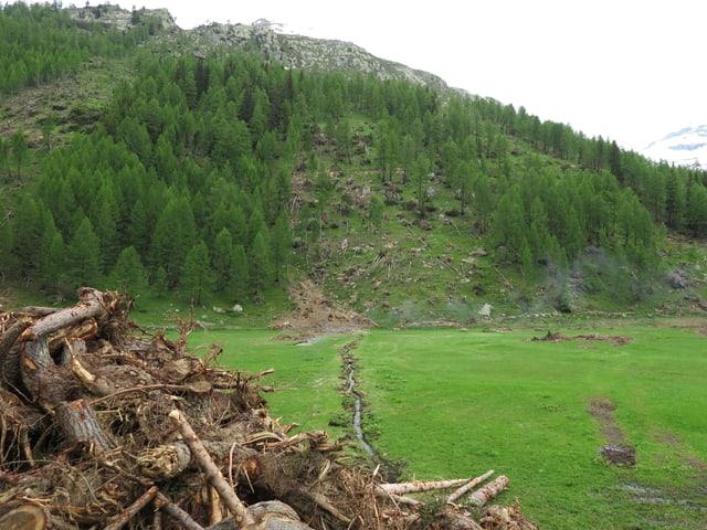 Waldhang durch Lawine zerstört.