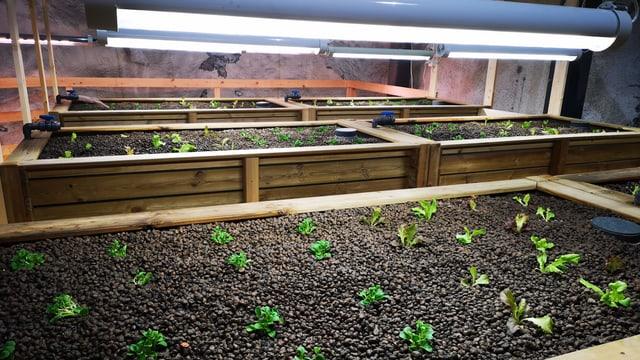 Pflanzenbeete im Untergrund