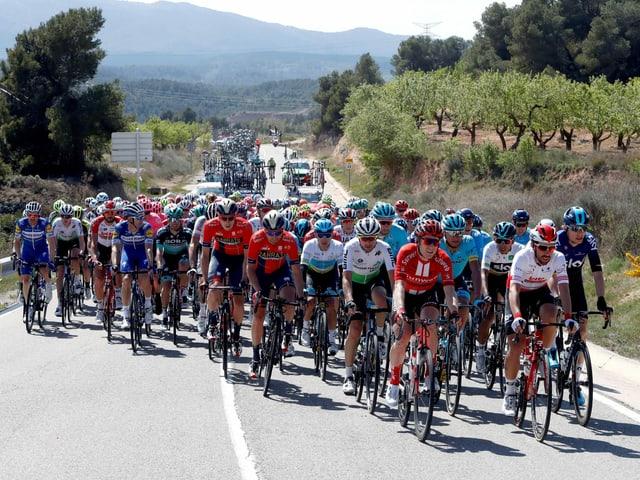 Die Fahrer an der Katalonien-Rundfahrt.