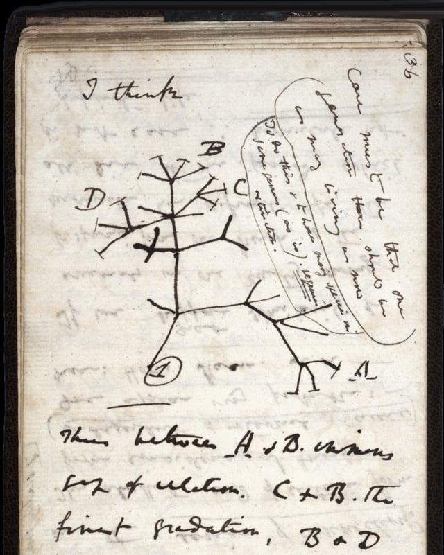 Eine Seite aus dem Notizbuch von Charles Darwin.