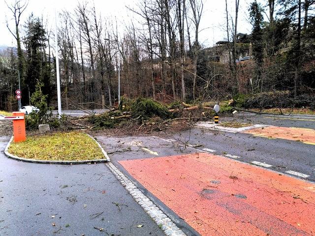 Ein umgestürzter Baum in der Luzerner Gemeinde Horw.
