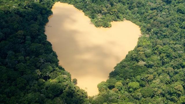Die Wichtigkeit des Amazonas-Gebietes