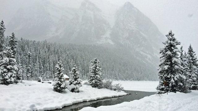 Verschneiter Tannenwald, im Hintergrund ein Berg.