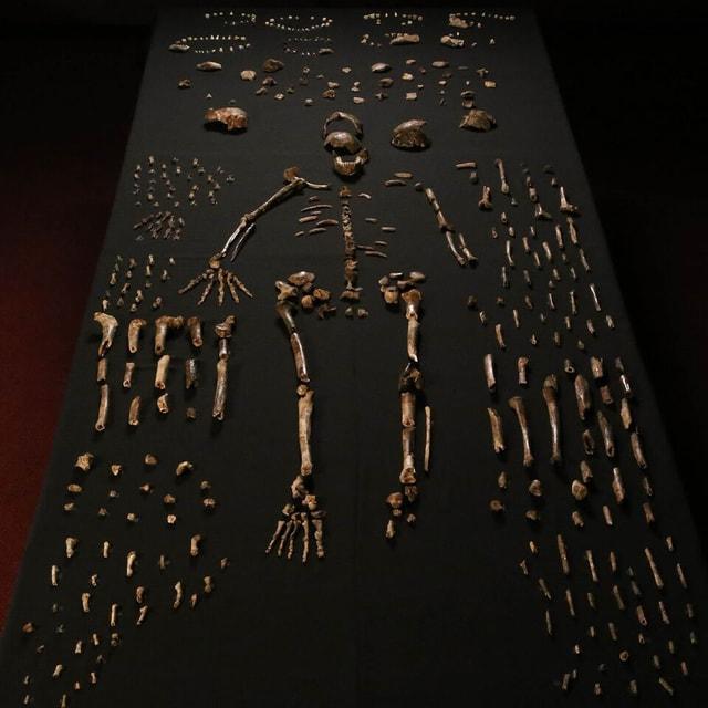 Knochen und ein Skelett auf schwarzer Unterlage.