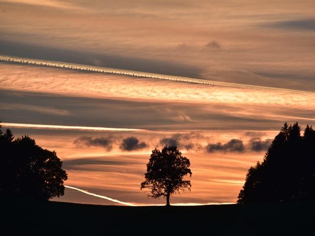 Hellgrauer bis gelblicher Himmel bedeckt von feinem Wolkenschleier. Darin sind Streifen zu erkennen. Unten schwarze Konturen von Bäumen.