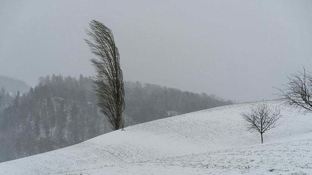 Vom Wind geformter Baum