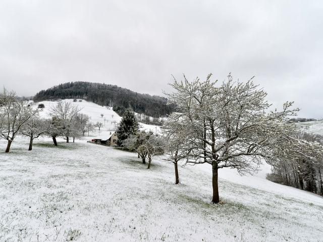Blick über eine leicht verschneite Landschaft mit Hügeln und Bäumen