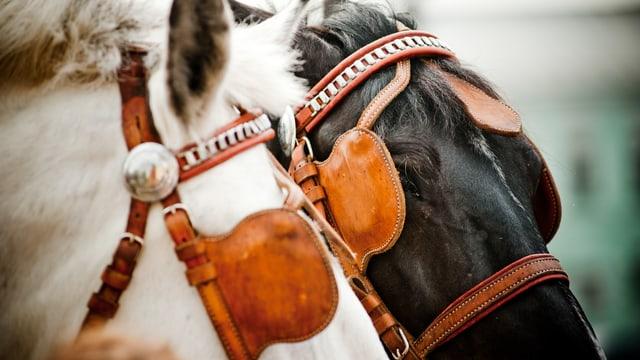 Pferde mit Scheuklappen