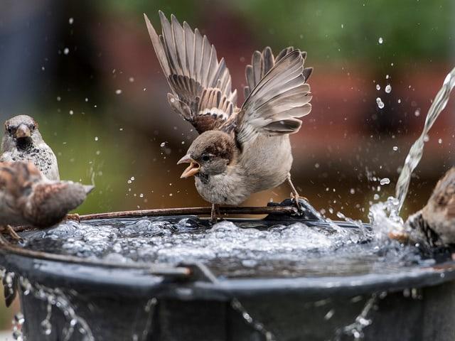 Spazten baden an Brunnen