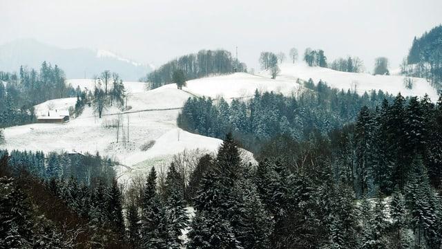 Verschneite Hügellandschaft mit viel Wald