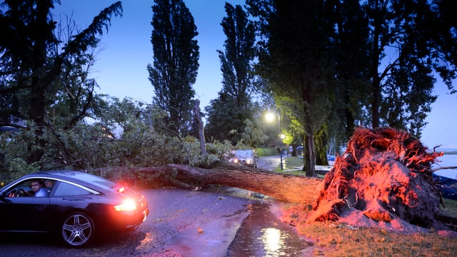 Autos an einem umgefallen Baum