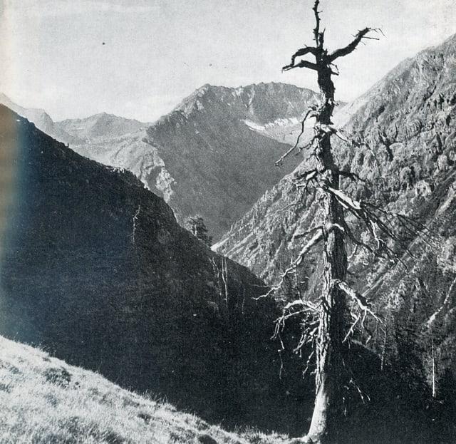 Parc naziunal svizzer - Val Sassa