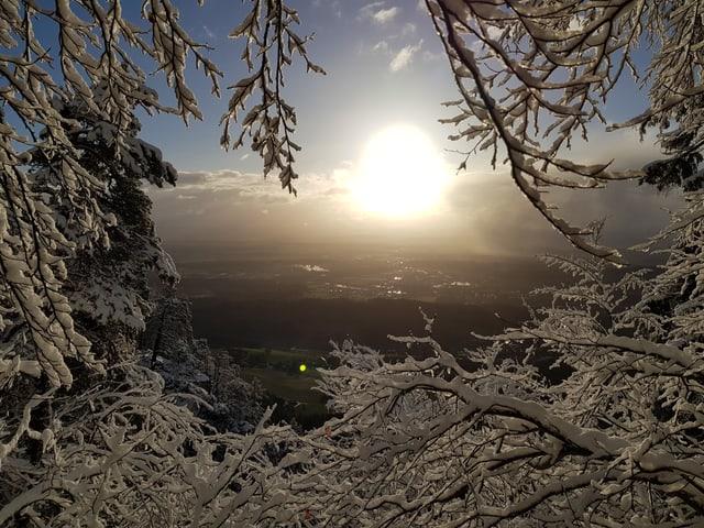 Blick vom Weissenstein durch verschneite Bäume auf das grüne Mittelland.