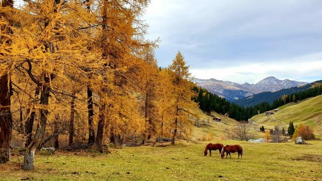 Goldener Oktober im Sertigtal trotz dichten hohen Wolkenfeldern.