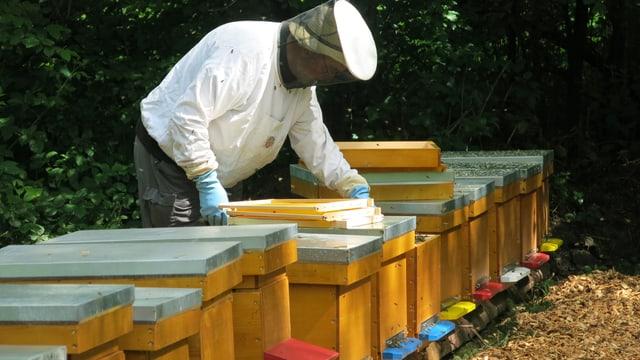Ein Imker beugt sich über einen Bienenkasten