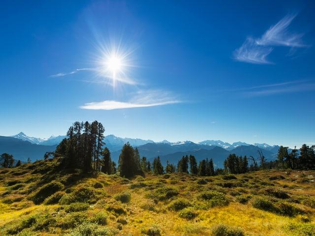 Wiese und Strächer mit Bergen im Hintergrund und strahlender Sonne.