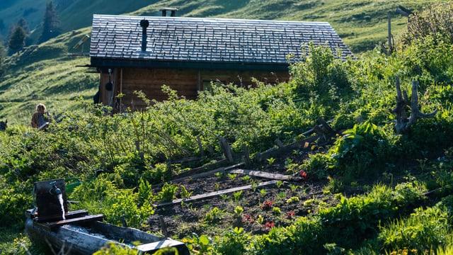 Eine Gemüsegarten, im Hintergrund eine Alphütte.