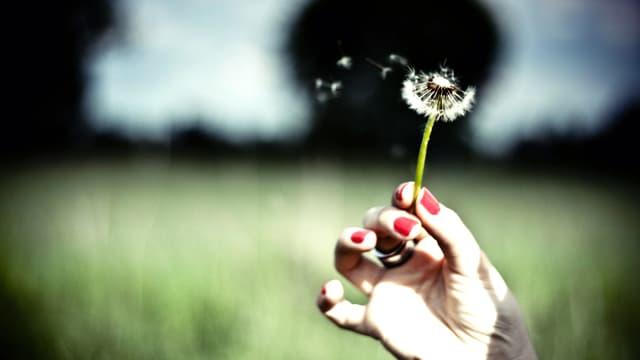 Eine Hand hält eine Pustemblume, mehrere Samen fliegen davon.
