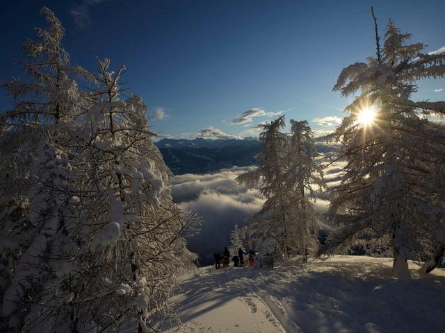 Verschneite Berge und Bäume mit blauem Himmel